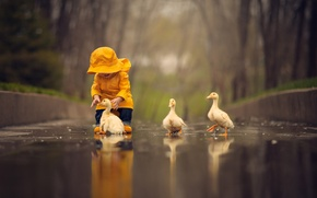 Picture water, birds, puddle, baby, child, Chicks, the goslings