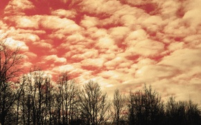 Picture forest, the sky, clouds