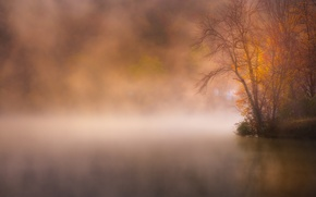 Picture autumn, fog, lake, Park