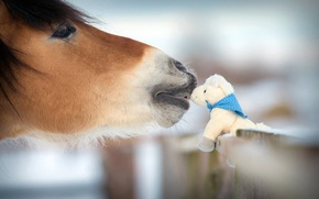 Picture winter, nature, kindness, horse, tenderness, toy, the fence, blur, animals, nature, figure, bokeh, souvenir, horse, ...