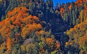 Picture autumn, forest, trees, mountains, bridge