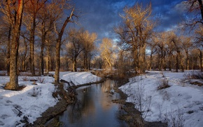 Picture winter, forest, clouds, river