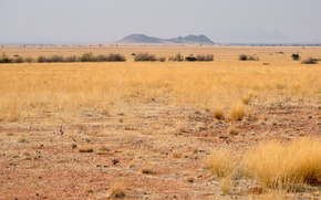 Picture landscape, desert, Savannah, Africa, Namibia, South Africa