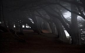 Picture trees, tilt