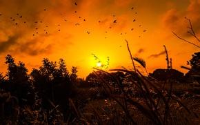 Picture grass, the sun, birds, sunrise