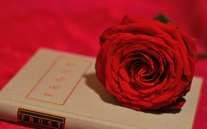 Picture flower, style, rose, Bud, book