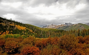 Picture autumn, forest, the sky, mountains, horizon