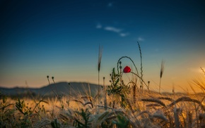 Picture field, the sky, flowers