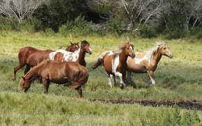 Picture pony Astig, pony Refuge, wild horses