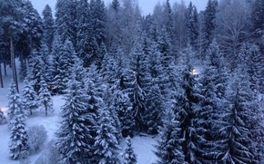 Picture snow, tree, new year, Rybinsk, Kstovo