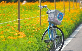 Picture road, field, summer, flowers, bike