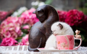 Picture cat, flowers, pose, kitty, small, garden, small, Cup, figurine, sculpture, saucer, figure, imitation, ragdoll, the …