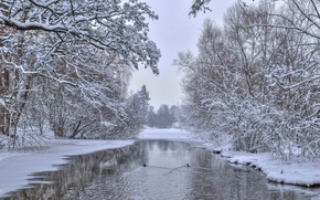 Picture winter, trees, nature, river