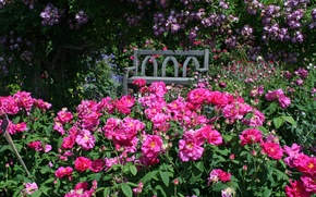 Picture bench, England, roses, garden, Devon, England, Rosemoor Gardens
