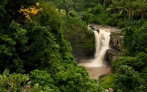 Picture forest, rock, palm trees, waterfall, Bali, Indonesia, Tegenungan Waterfall, Indonesia, Bali