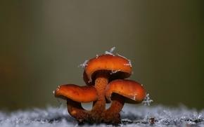 Picture snowflakes, mushrooms