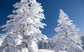 Picture winter, the sky, snow, trees, landscape