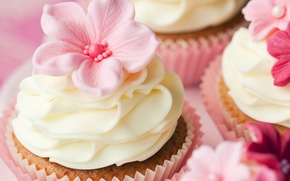 Picture decoration, flowers, cream, dessert, cakes, cakes, sweet, cupcakes