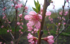 Picture trees, Flowering, April