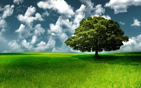 Picture the sky, grass, clouds, tree
