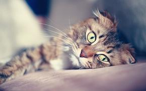 Picture cat, mustache, look, pupils, bokeh, alertness
