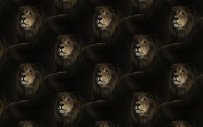 Picture texture, Leo, king, mane