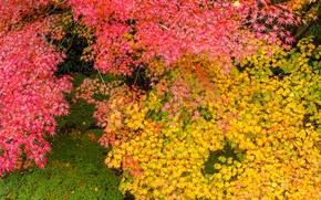 Picture autumn, leaves, Park, paint, Japan, maple, the crimson