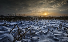 Picture winter, field, the sky, the sun, snow