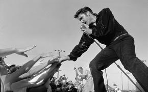 Picture scene, concert, microphone, the audience, elvis presley, rock n roll, Elvis