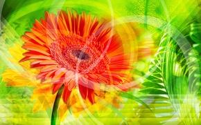 Picture leaf, orange, Wallpaper, flower, stem