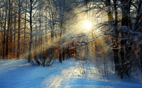 Picture snow, winter, road, white, path, sunset, trees, sky, forest, cool, forest, snow, nature, trees, nice, ...