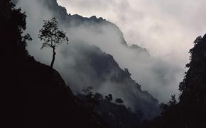 Wallpaper Tree, fog, slope, mountains