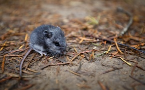 Picture nature, background, mouse