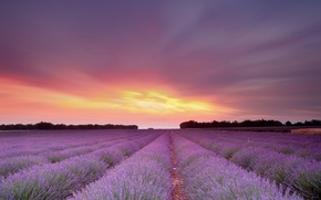 Picture field, the sky, the sun, sunset, flowers, lavender