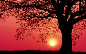 Picture sky, trees, landscape, sunset, leaves