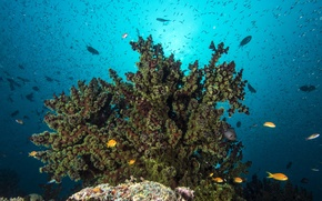 Picture surface, fish, the bottom of the sea, reef, sunlight, coral