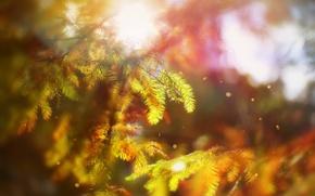 Picture Autumn, Bokeh, Trees, October Rhapsody