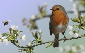 Wallpaper macro, bird, branch, flowering, bird