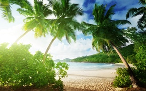 Picture sand, sea, beach, summer, palm trees, summer, beach, sea, sand, paradise, vacation, palms, tropical