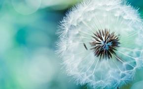 Picture macro, dandelion, air