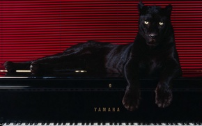 Picture line, 150, piano, Panther