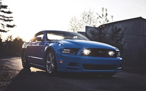 Picture Mustang, Ford, Ford, Muscle, Mustang, Car, Blue, 5.0