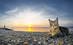 Picture cat, the sky, cat, water, the sun, landscape, sunset, nature, stones