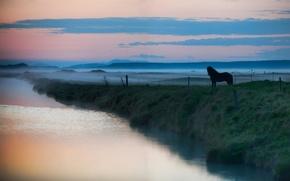 Wallpaper animals, landscapes, fog, horse, lake, water, haze, horse, river