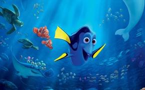 Picture colorful, cinema, Pixar, ocean, octopus, eyes, movie, animal, fish, film, tropical, reef, whale, turtle, jellyfish, …