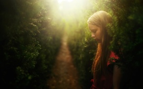 Picture girl, alley, Dreams, Christmas trees, needles, TJ Drysdale