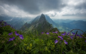 Wallpaper flowers, mountains, Switzerland, Alps, top, panorama, Switzerland, Alps, Appenzell Alps, Appenzell Alps, the mountain range ...