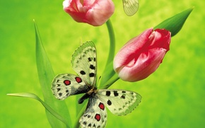 Wallpaper flowers, green, butterfly, Tulip