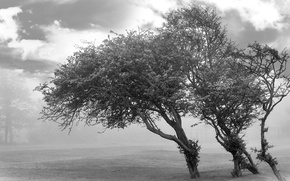 Picture clouds, Trees, black and white
