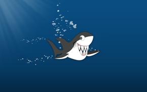 Picture the ocean, teeth, Shark, fun